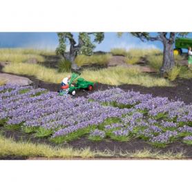 Lavendel, blommande -Noch 07136